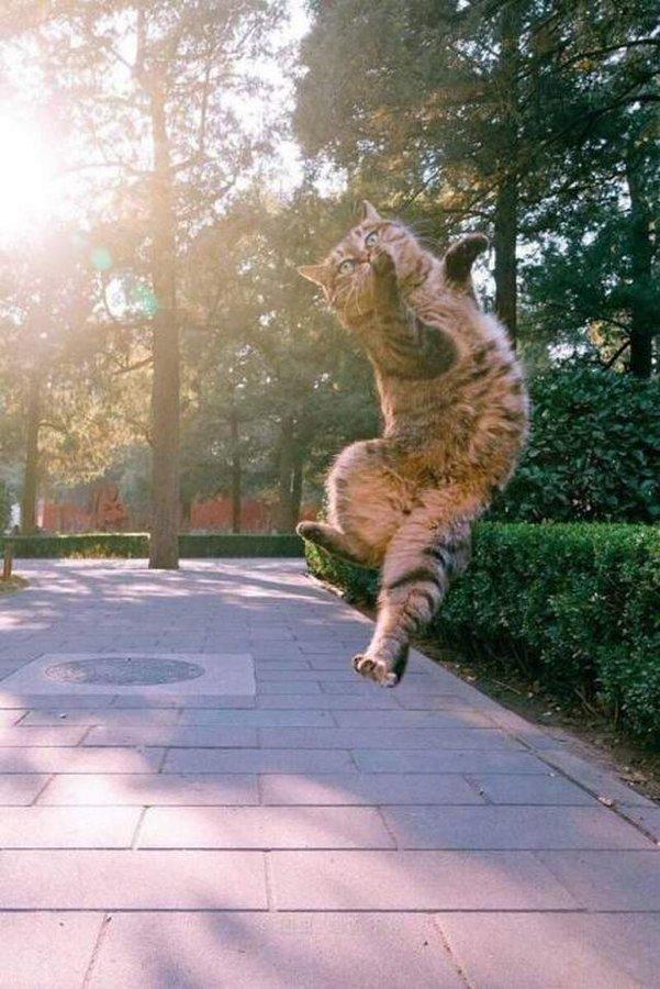 ..ανάποδη καουμπόισσα on Twitter in 2020 Dancing cat