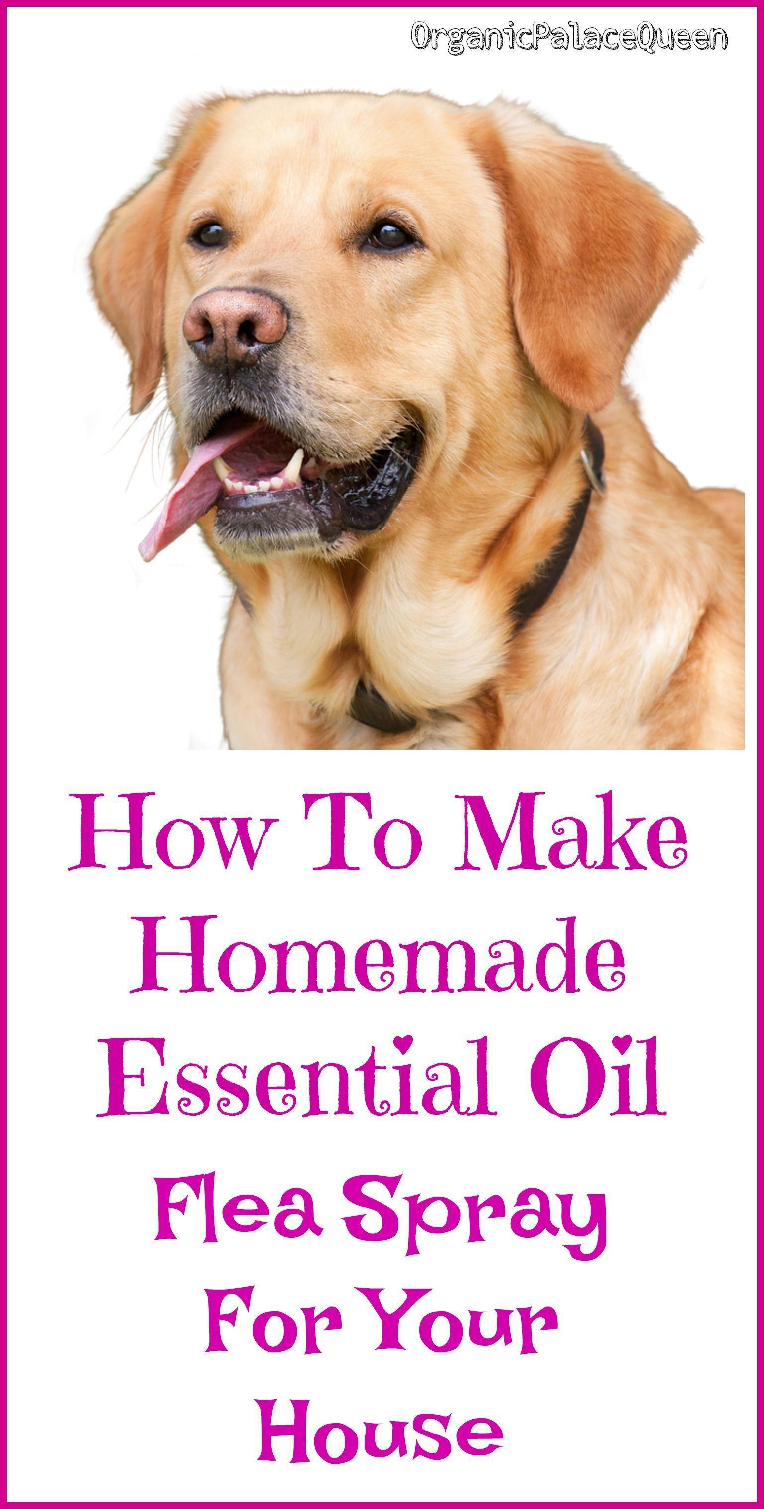 Homemade flea spray for house with essential oils flea