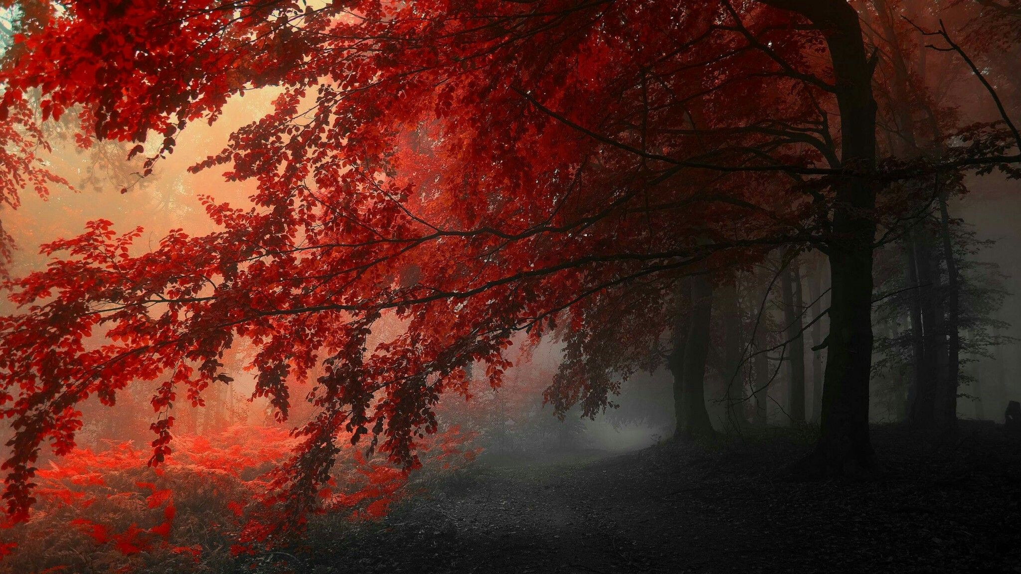 Red Forest No 1 Tree Hd Wallpaper Forest Wallpaper Nature Wallpaper