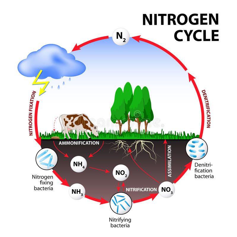 Nitrogen Cycle The Processes Of The Transform Nitrogen From One
