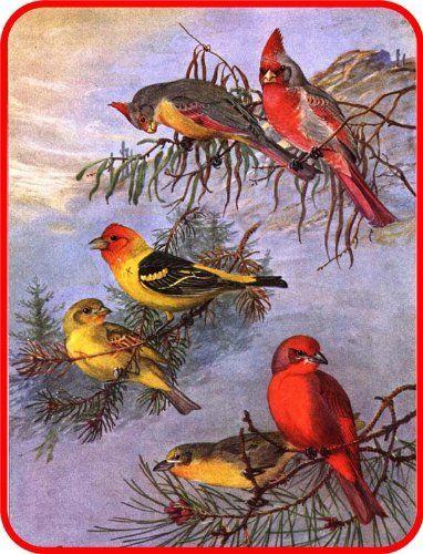Amazoncom Christmas Winter Wild Birds In Snow Etched Vinyl - Bird window stickers amazon