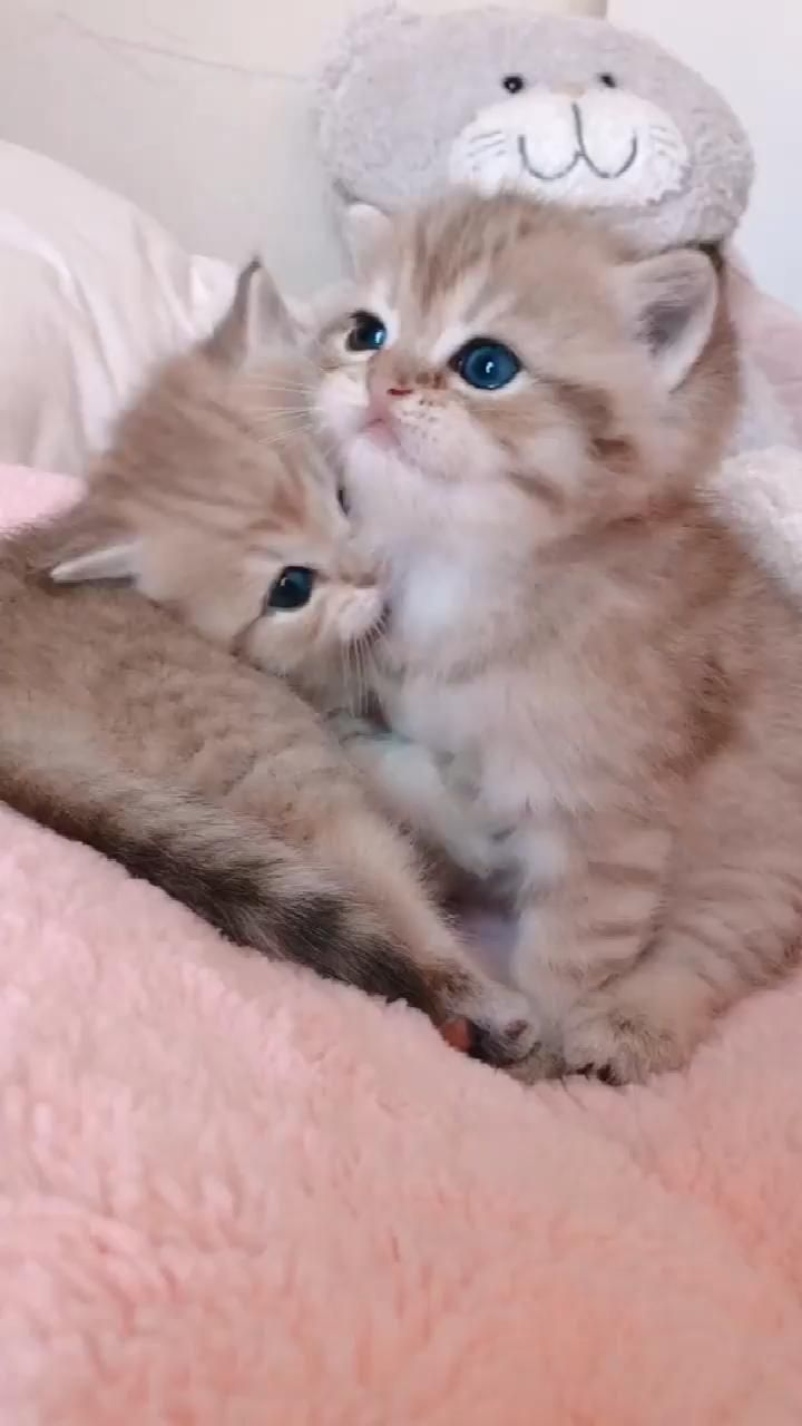 The kitten on the left is too bad~~