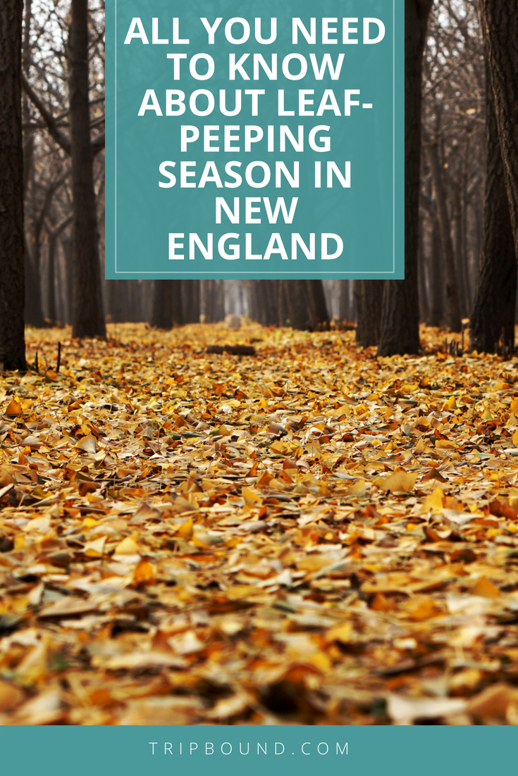 Best Time To Visit New England For Fall Colors 2019 Fall Leaf Peeping Season In New England Vacation Tips in 2019