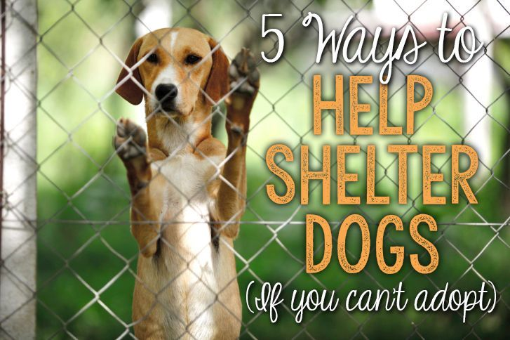 5 Ways to Help Shelter Dogs When You Can't Adopt | eBay