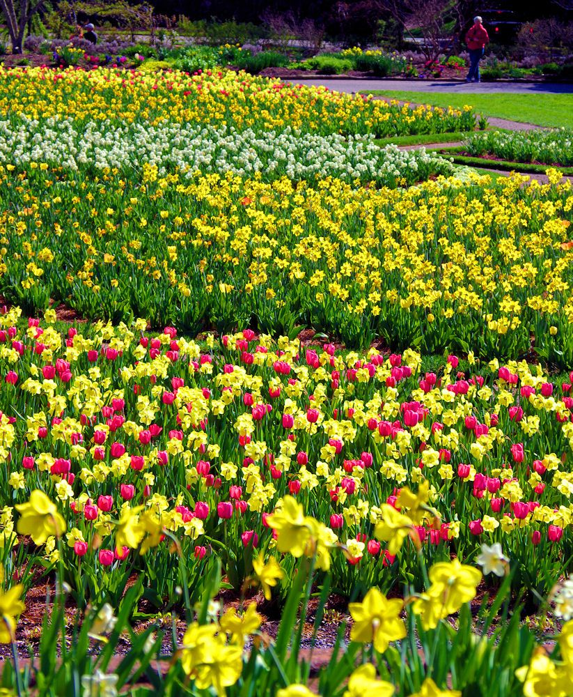 Tulip Time In The Biltmore House Gardens In Asheville 24 Hours In