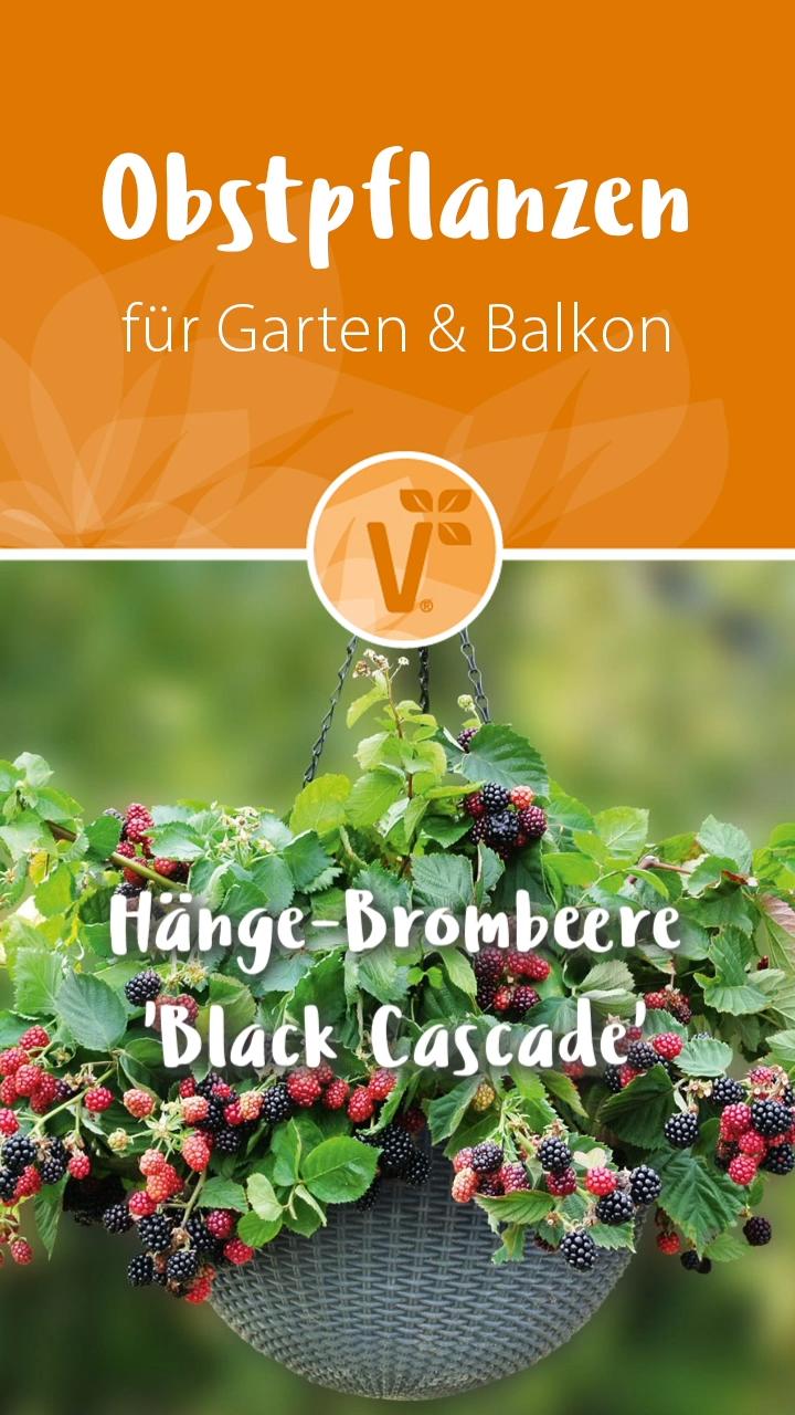 Photo of Obstpflanzen für Garten & Balkon