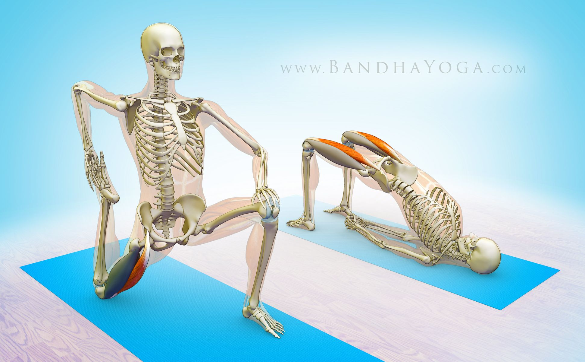 the daily banda - site that breaks down yoga poses by muscle group ...