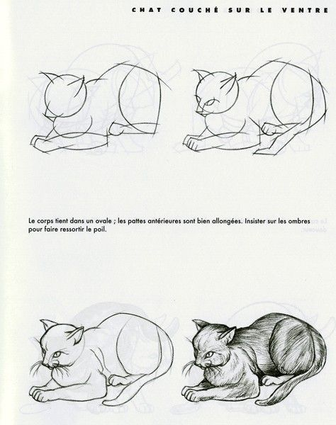 Chats dessin facile - Chat facile a dessiner ...