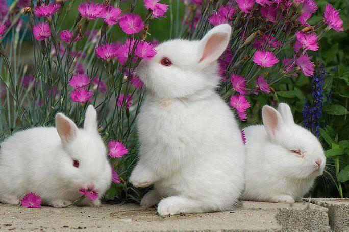 Maryana On Twitter Cute Animal Pictures Animals Animals Beautiful