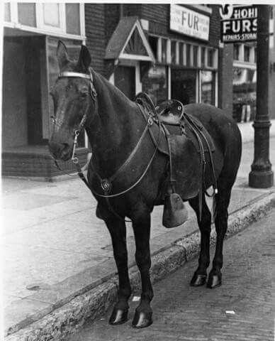 Louisville Police Horse 1920s Louisville Ky Louisville My Old Kentucky Home