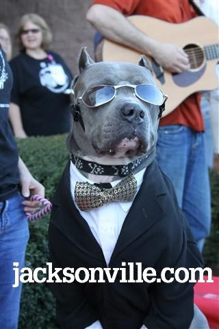Riland With Shades Hey You Are Doing It Dude I Love Dogs Pet Costumes Bully Breeds