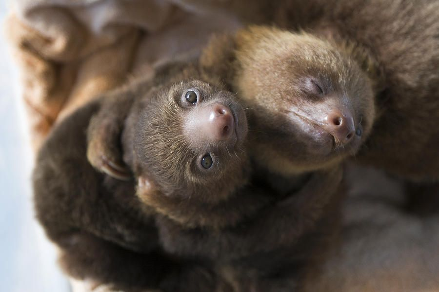 Googled two-toed sloths hugging.. was not disappointed