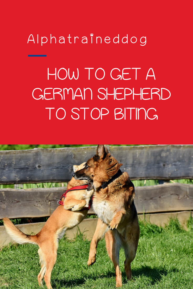 How to Get a German Shepherd to Stop Biting While Teething