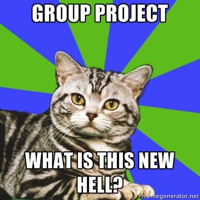 Introvert Cat:  Group projects.  What is this new hell?