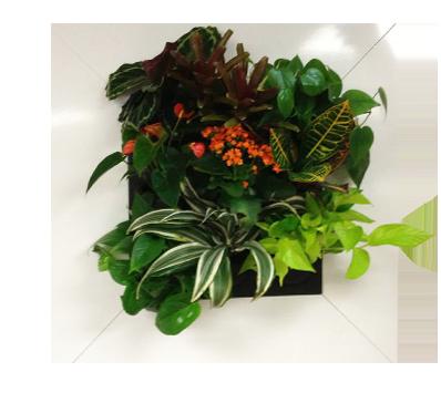 Decorative Plant Wall & Indoor Vertical Garden | Suite ...