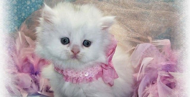 Cute Cats Hd Wallpapers Free Download For The Year 20 15 Kittens Cutest Baby Cute Baby Cats Pretty Cats