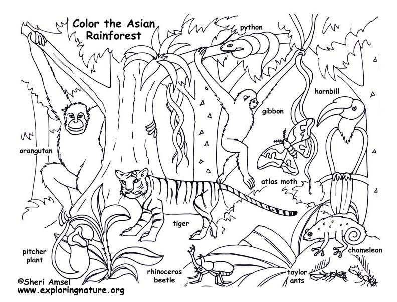 Rainforest Asian Coloring Page Animales Arte Caricaturas