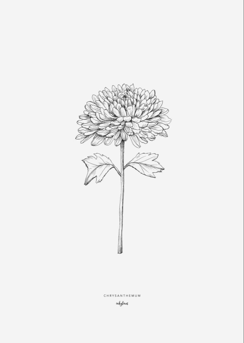 Chrysanthemum Tattoo Chrysanthemum Tattoo Birth Flower Tattoos Chrysanthemum Flower Tattoo