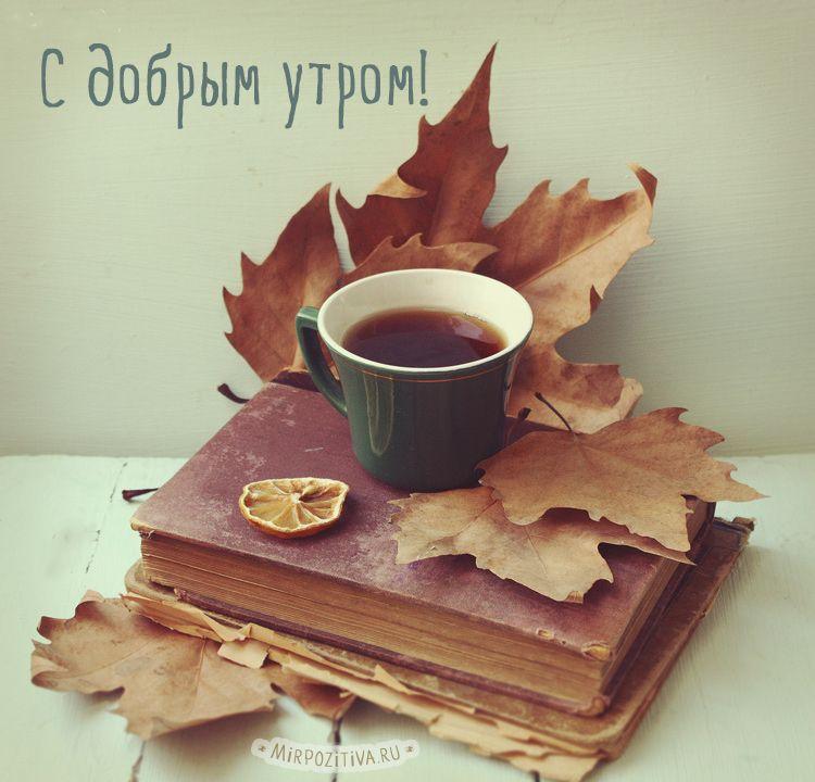 Осенние картинки с добрым утром: красивые и прикольные (с ...