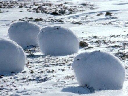 Nuuk Arctic Animals Animals Cute Animals