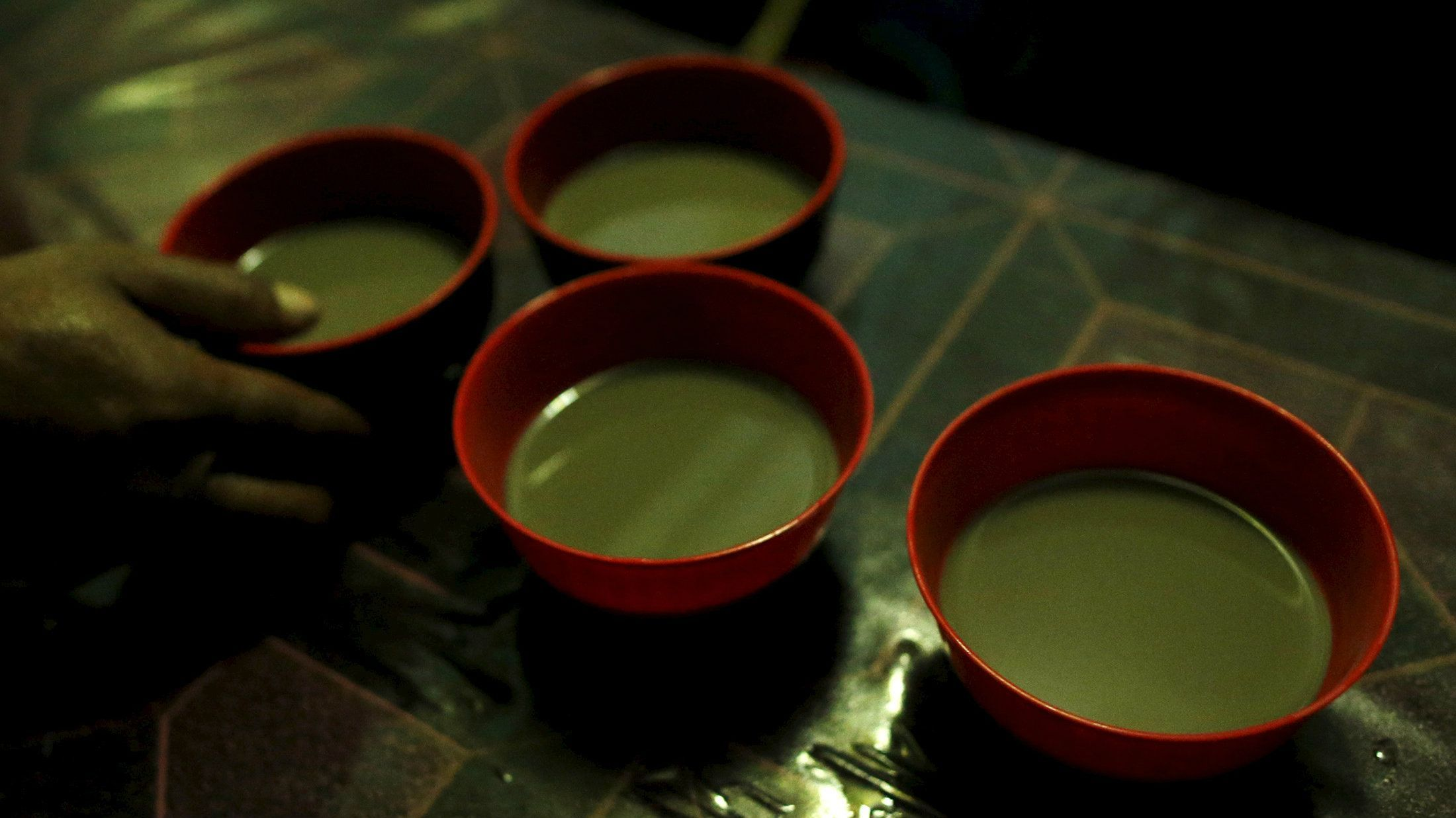 Kava is a tropical shrub in the pepper family native to