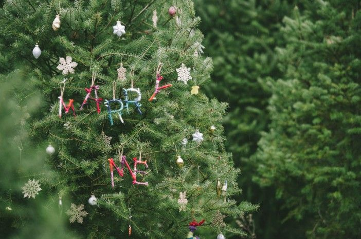 Marriage Proposal At A Christmas Tree Farm Christmas Proposal Christmas Tree Farm Marriage Proposals