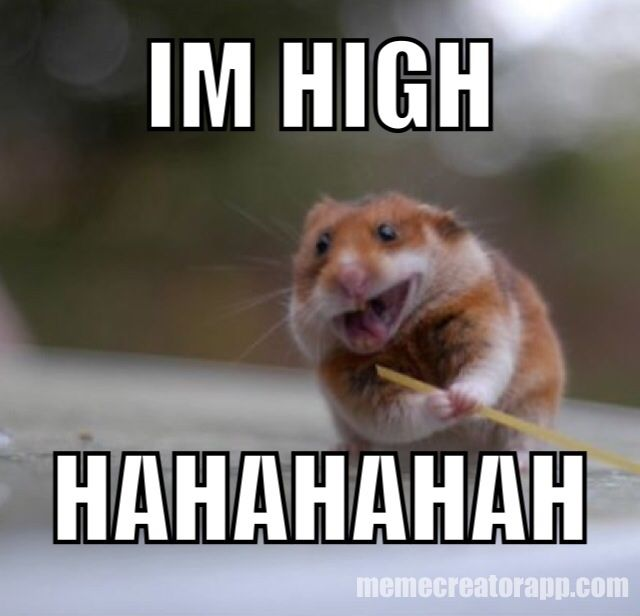 With the legalization of weed...all hamsters are like