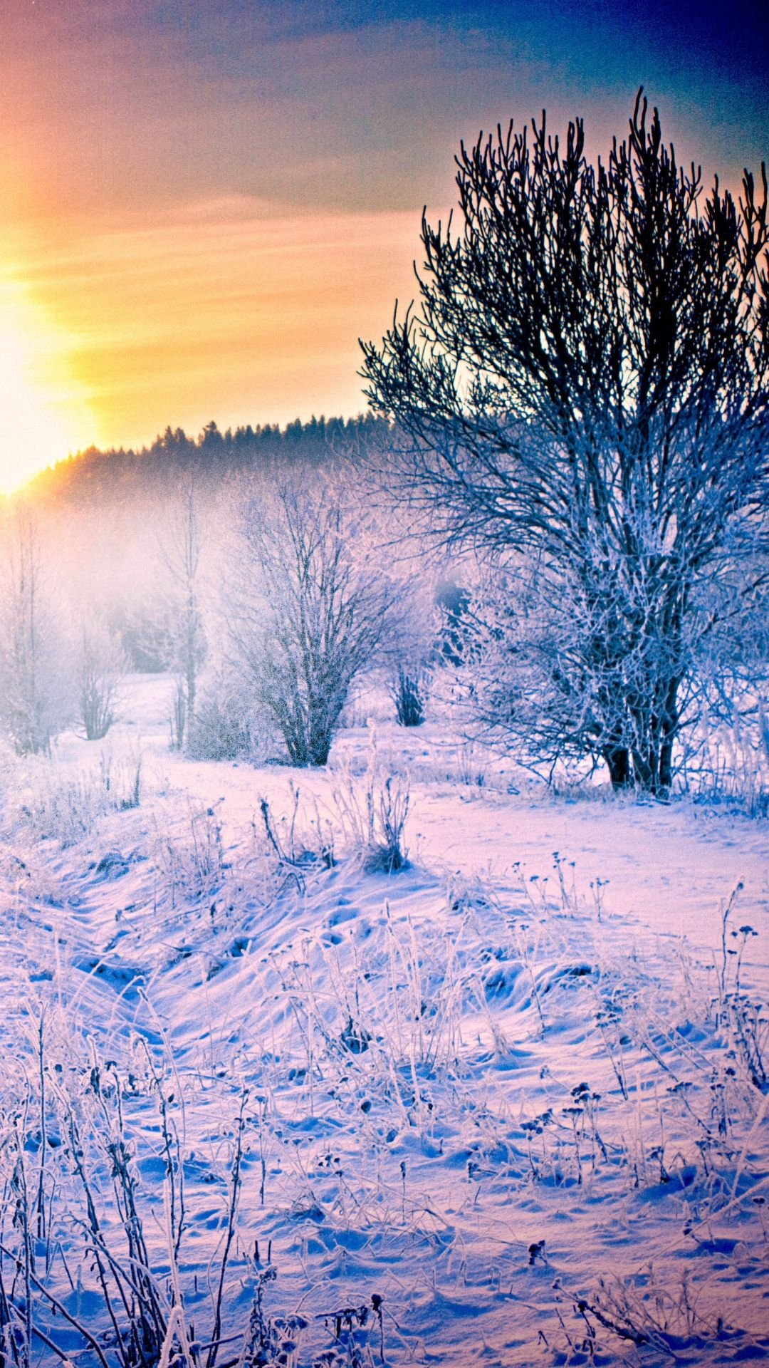 winter iphone wallpaper winter snow forest trail iphone wallpaper wallpapers 13315