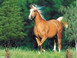 Resultat De Recherche D Images Pour صور حيوانات اليفة Palomino Horse Horses Pretty Horses
