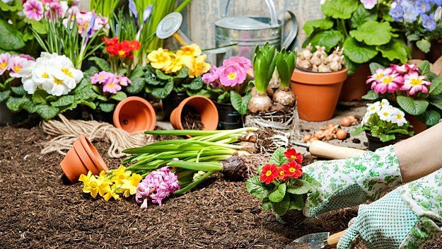 Starting A Flower Garden | Keep Your Flower Garden Blooming All Year Round  With 3 Easy