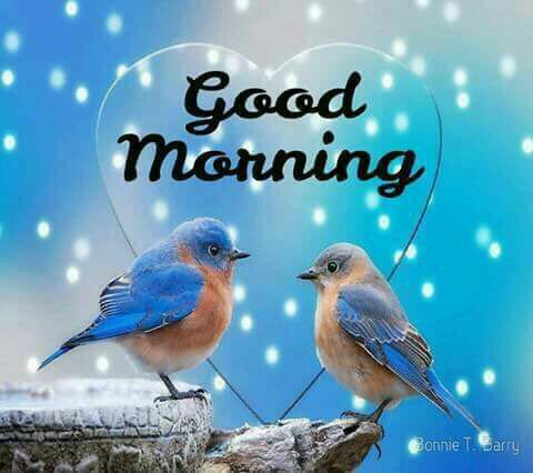 Good Morning Days Of The Week Love Birds Bird Wallpaper