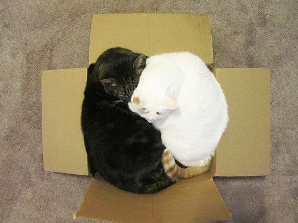 20 Cats Show That No Space Is Too Tight