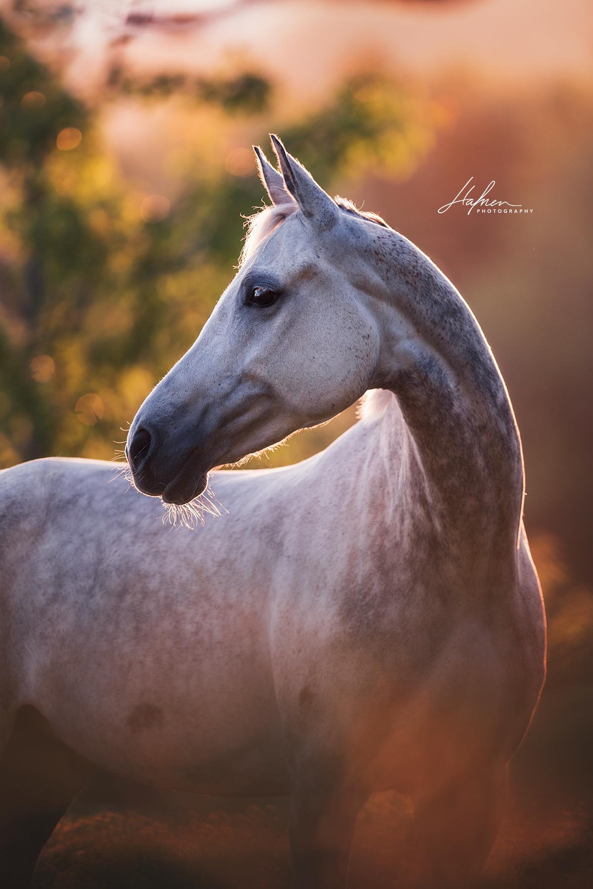 stute im portrait   pferde fotografie, pferdefotografie