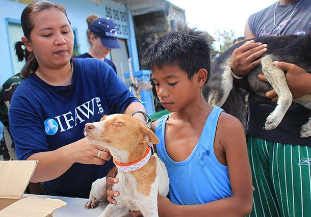 Typhoon Haiyan 5 Weeks In Rescue Team And Philippine Partner Response Efforts Continue Rescue Team Animals Rescue
