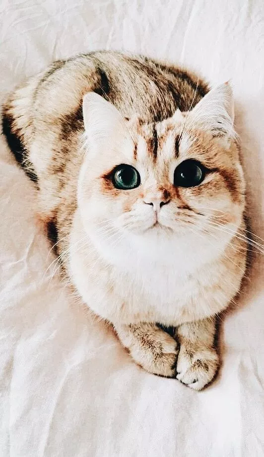 خلفيات قطط كيوت 2019 صور قطط للبنات رائعة 2020 فوتوجرافر Cute Cats Photos Cute Animals Pretty Cats