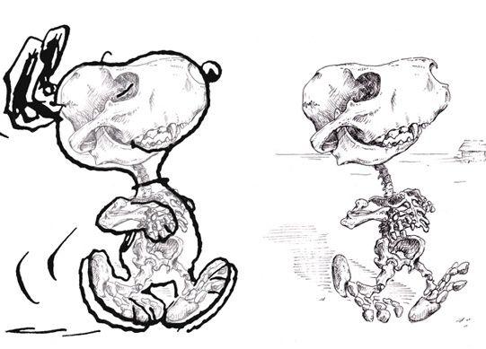Cartoon Character Skeletons   Pinterest   Skeletons, Anatomy and Cartoon