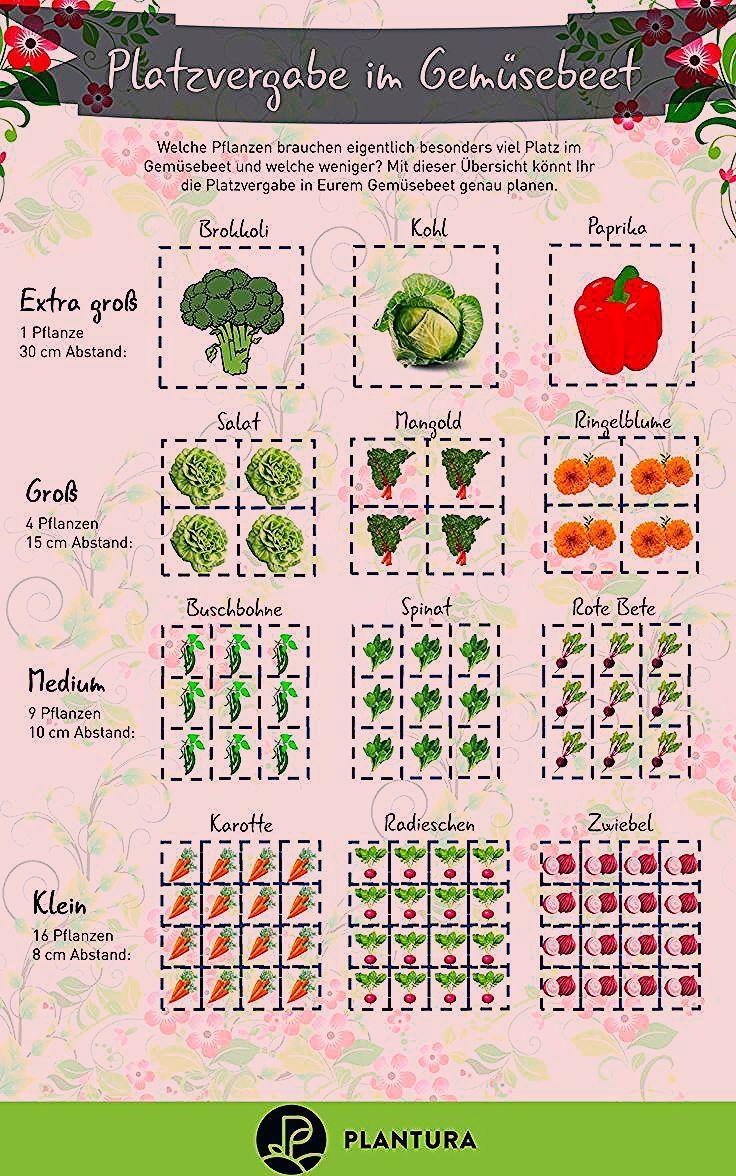 Photo of Hochbeet bepflanzen: Fruchtfolge & nützliche Tipps – Plantura