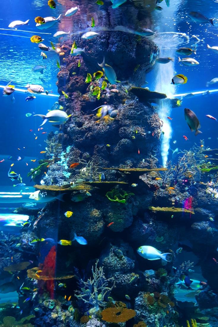 Beautiful Fish Wallpapers For Iphone In 2020 Schone Fische Aquarium Fische Aquarium