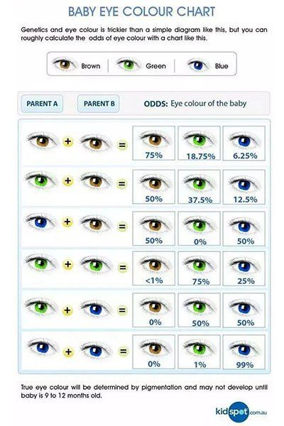 Die Augenfarbe Deines Babys Kann Nun Berechnet Werden Missmum