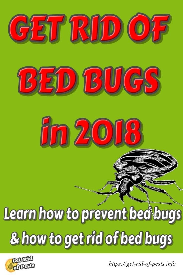 Get rid of bed bugs do it yourself pest control bedbugs solutioingenieria Image collections