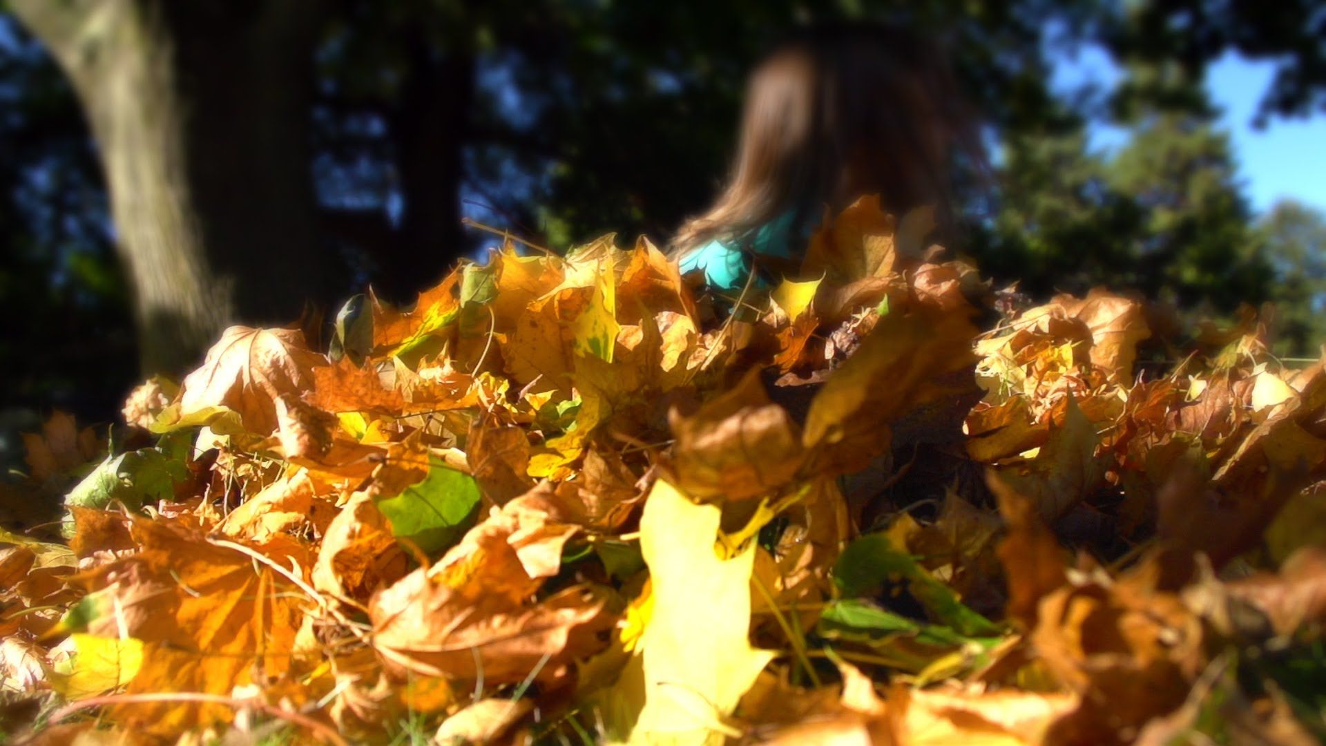Beachfront B Roll Pile Of Leaves Free To Use Hd Stock Video Footage Stock Video Video Footage Free Stock Footage