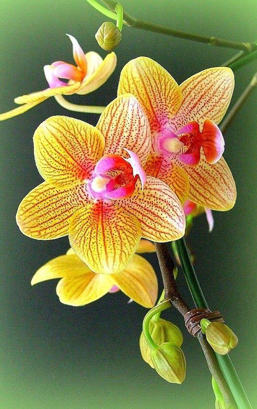 Cvety I Babochki Flowers And Butterfly Google Beautiful Orchids Orchid Flower Beautiful Flowers
