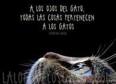 A Los Ojos Del Gato Citas Sobre Gatos Gatos Amo A Los Gatos