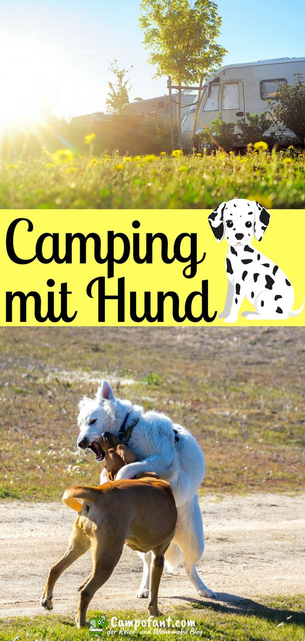 Camping Mit Hund Tipps Fur Den Perfekten Hundeurlaub Hunde Urlaub Mit Hund Und Campingplatz Mit Hund