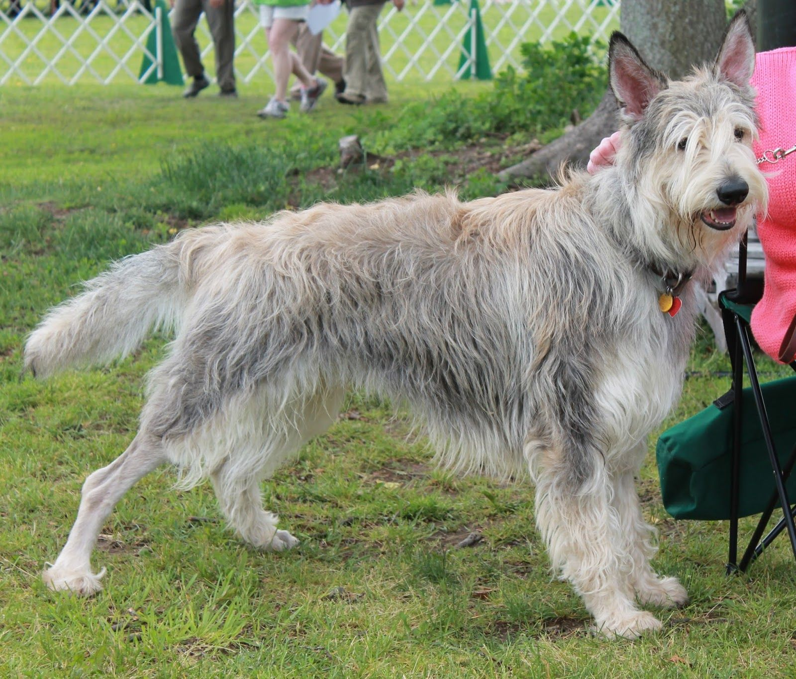 2013 Greenwich Kennel Club AllBreed Dog Show Dogs, Dog