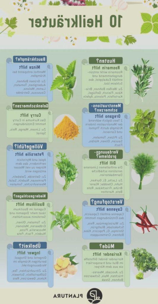 10 Heilkräuter: Wir zeigen Euch die besten Heilpflanzen aus dem eigenen Garten. #kleinekräutergärten