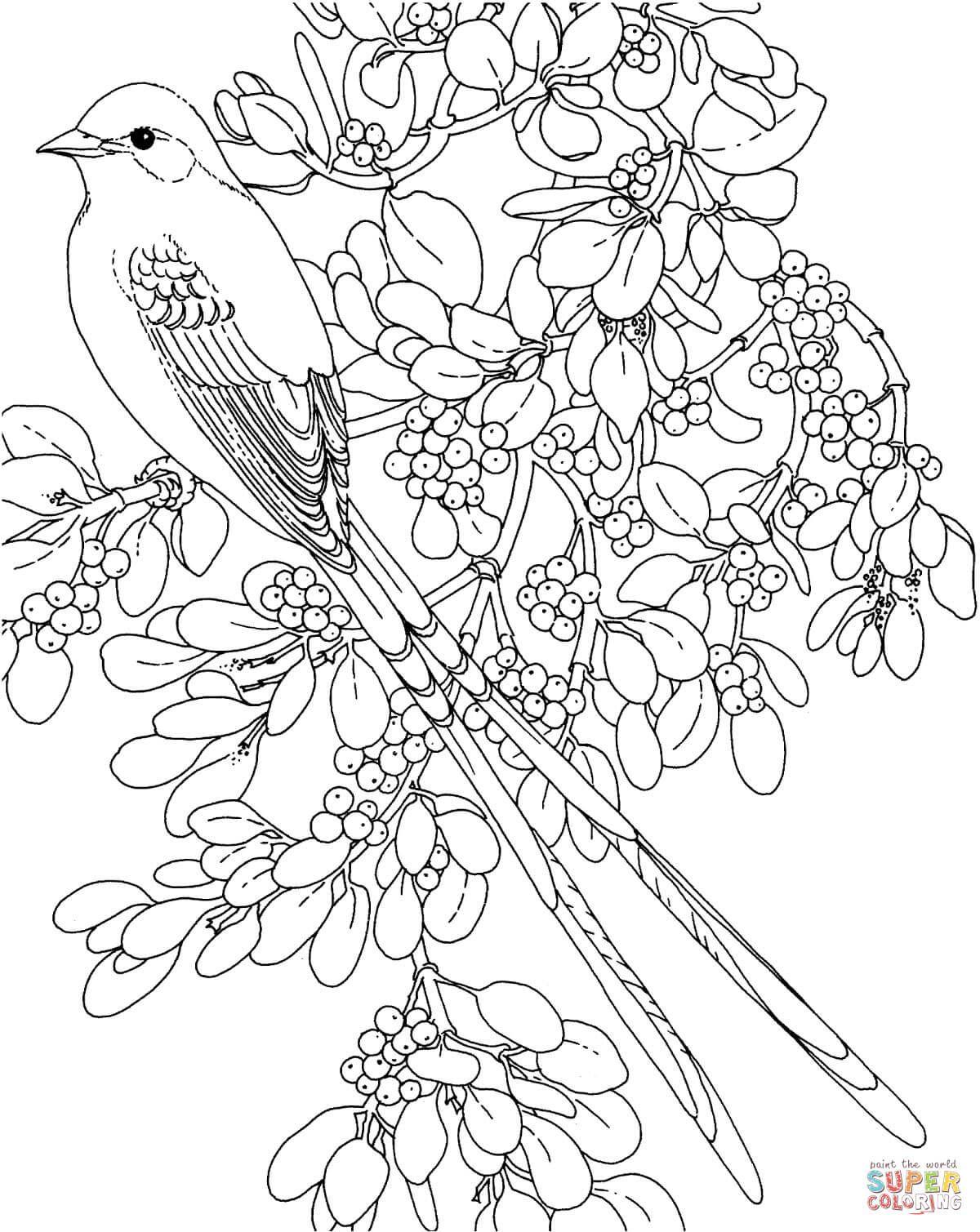 imagens de flores de cerejeira para colorir Pesquisa