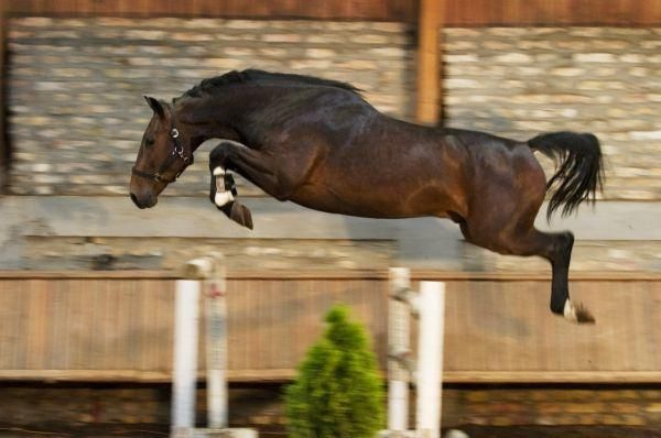What an incredible free-jump! He makes it look so effortless.