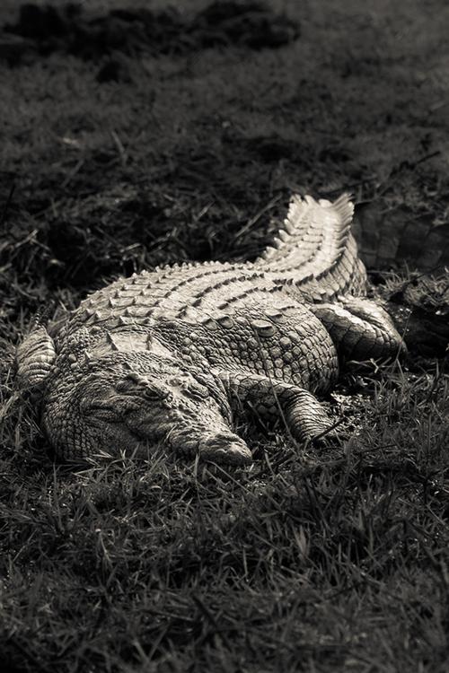 Godzilla| Manuel Graf