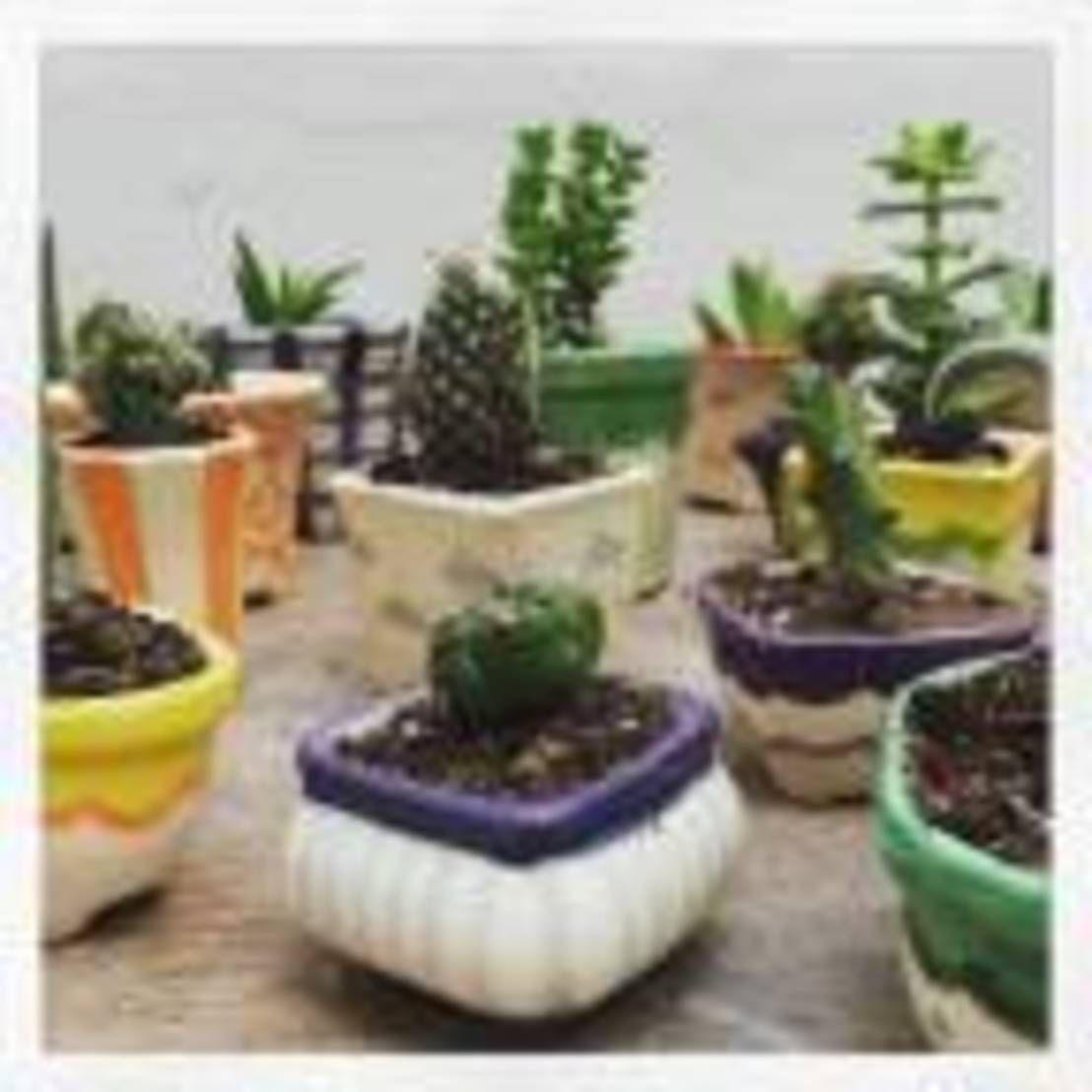 Encontrá las mejores ideas e inspiración para el hogar. MIni Macetitas por My Pottery by Ceci Presas | homify